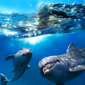 Dolfijnen  zoektocht excursie